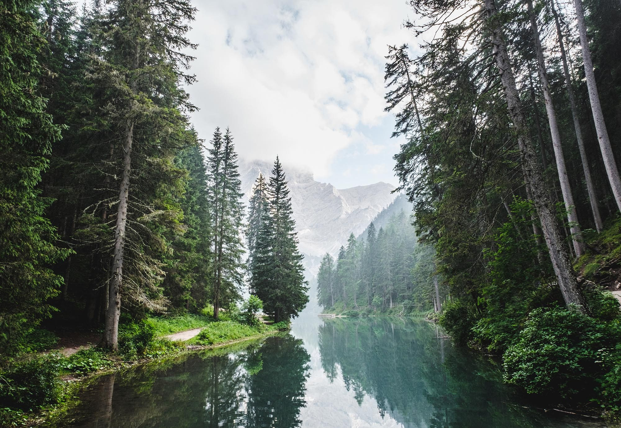 ecosystem - Gallery